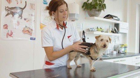 Hond wordt gecontroleerd in Dierenkliniek Almere-Stad