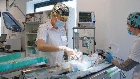 Operatie in Dierenkliniek Almere-Stad
